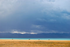 Horses feeding along Song-Kol lake Stock Photo