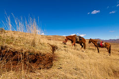 Horses feeding on grass in the hills Stock Photos