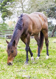 Horses feeding. Stock Photos