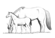 Horses feeding drawing Royalty Free Stock Images