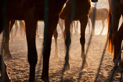 Horses  Feet Stock Photography