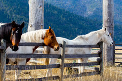 Horses At The Fence Royalty Free Stock Photography