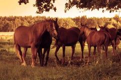 Horses on the field Stock Photos