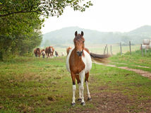 Horses on the field Royalty Free Stock Photography