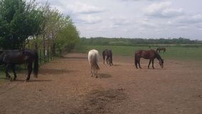 Horses in field. On a beautiful spring day Stock Photo