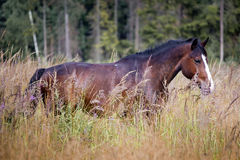 Horses on a field stock photography