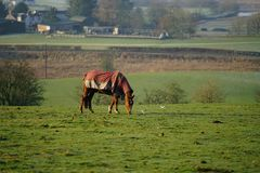 Horses in field enjoying the view royalty free stock photo