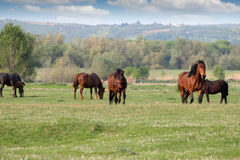 horses on field Royalty Free Stock Images