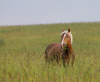 Horses in field Royalty Free Stock Photography