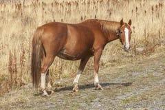 Horses in field Stock Photo