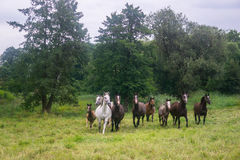 Horses on a field Royalty Free Stock Image