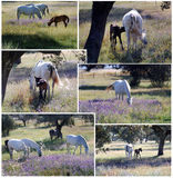 Horses in the fields Royalty Free Stock Images