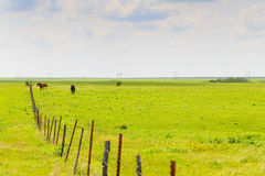 Horses in the Flint Hills. Two horses in a paddock in the green pastures of the Flint Hills region in Kansas stock photography