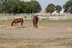 Horses and foal Royalty Free Stock Images
