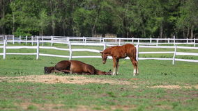 Horses and foal on farm Royalty Free Stock Photos