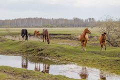 Horses and foal grazing in the pasture stock photo