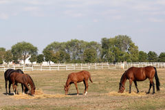 Horses and foals Stock Photos