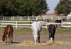 Horses and foals in corral Stock Image