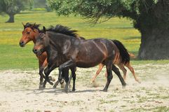 Horses and foals on field Stock Photo