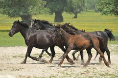 Horses and foals on field Stock Photos