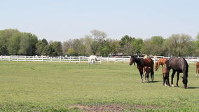 Horses and foals grazing Royalty Free Stock Photography