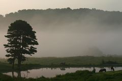 Horses and fog 1. Horses in field by pond with fog and hills. Tennessee rural scene stock image