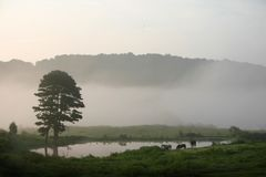Horses and fog. Horses in filed by pond with fog and hills. Tennessee rural scene Royalty Free Stock Photos