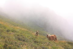 Horses in the fog. Ariege,Midi-Pyrenees region of France Royalty Free Stock Photography