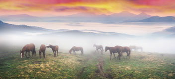 Horses in the fog at dawn royalty free stock photography