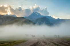 Horses into fog and mount Kazbek on the background Royalty Free Stock Photos