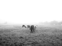 Horses in fog Royalty Free Stock Photos