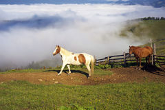 Horses in the foggy Carpathians Stock Photography