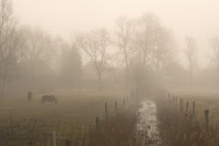 Horses on foggy morning Royalty Free Stock Photos