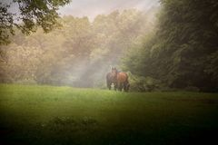 Horses in the deep forest royalty free stock image