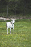 Horses in forest Stock Photography