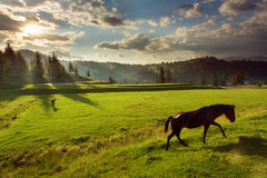 Horses in forest at sunset under cloudy sky. royalty free stock photography