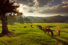 Horses in forest at sunset under cloudy sky. Stock Photo
