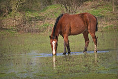 Horses free on a field in Argentina. In wintertime Stock Photos