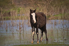 Horses free on a field in Argentina. In wintertime Royalty Free Stock Photography