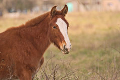 Horses free on a field in Argentina. In wintertime Royalty Free Stock Photo