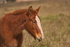 Horses free on a field in Argentina. In wintertime Stock Photo