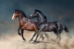 Horses free run in desert storm