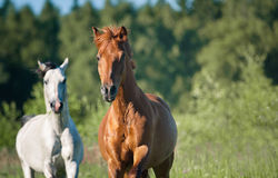 Horses on freedom in forest Stock Photo