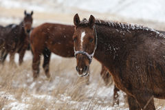 Horses are freezing in a snowy field Stock Photo
