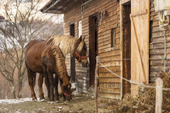 Horses in front of there house in winter time Royalty Free Stock Photo