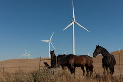 Horses in front of windmills Stock Photography