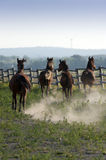 Horses gallop Royalty Free Stock Image