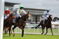 Horses Galloping at York Races, England, August 2015. Stock Images