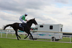 Horses Galloping at York Races, England, August 2015. Royalty Free Stock Photos