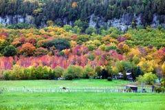 Horses gazing in fall colors of Niagara escarpment. Milton, ON, Canada royalty free stock images